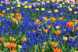 colorful-flower-background-11280654430Fwki