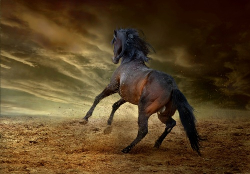 horse-2743013